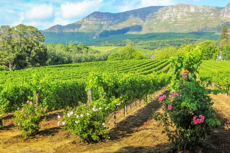 Winelands - South Africa