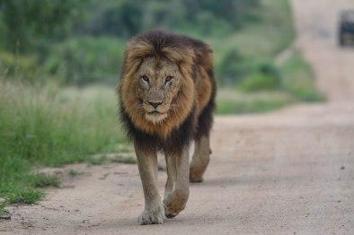 Skukuza Half Marathon & Kruger park Safari with Nature Travel Active
