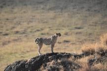 Kilimanjaro Marathon & Tanzania Safari with Nature Travel Active