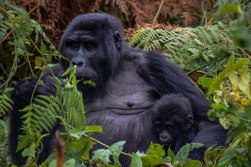 Uganda Marathon & Gorilla Experience with Nature Travel Active