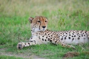 Serengeti Marathon and Safari with Nature Travel Active
